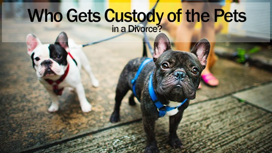 Who Gets Custody of the Pets in a Divorce?
